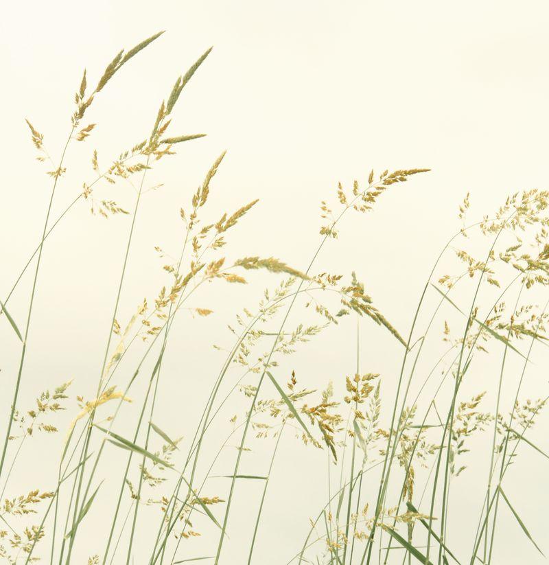 Weeds on cream