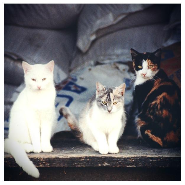 Barn Cats1